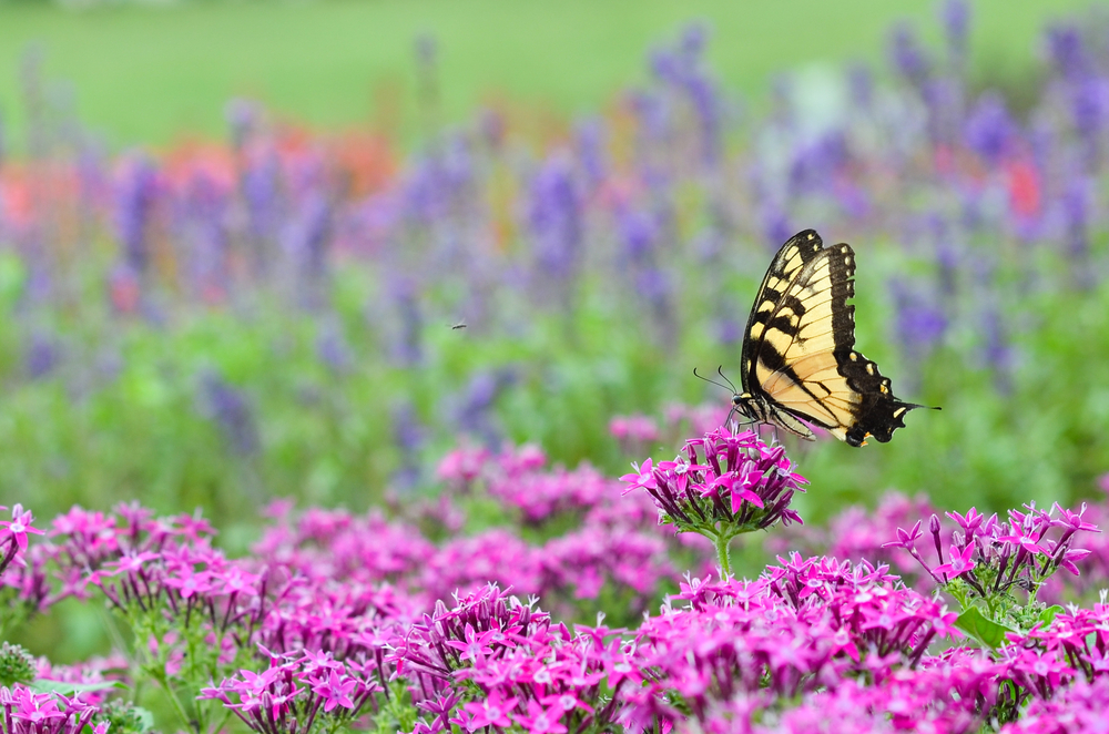 How to Make a Butterfly Garden? – The Step-By-Step Guide