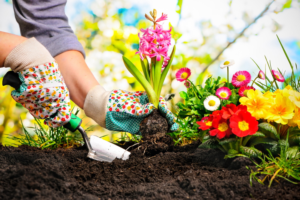 How to Garden - Gardening Guide