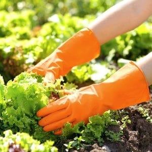 gardening gloves for garden work