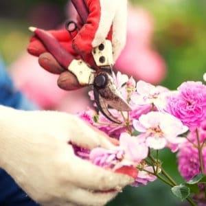 pruners for garden work