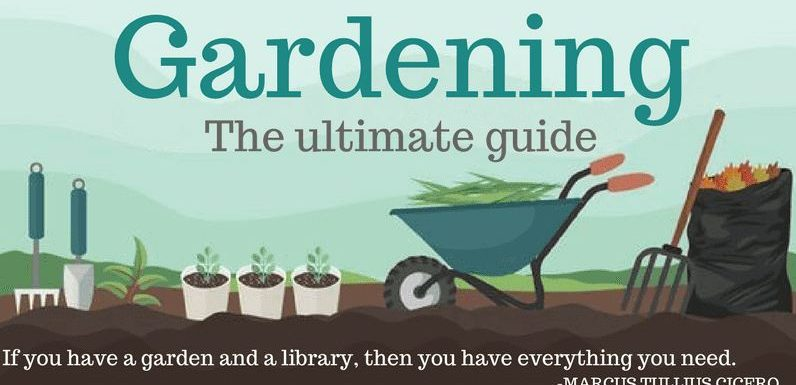 Infographic – Gardening the Ultimate Guide