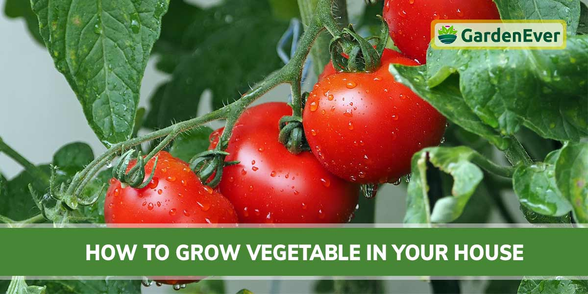 How To Grow Vegetable In Your House