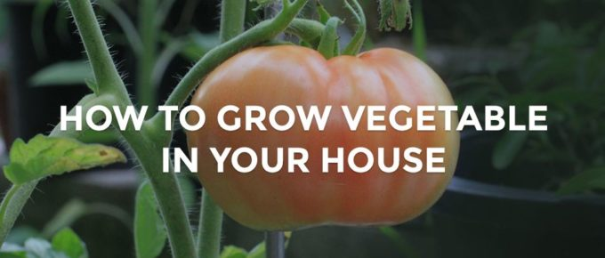 how to grow vegetable