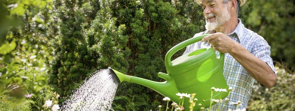 How to save water in the garden: 9 best ways