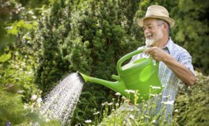 save water in the garden