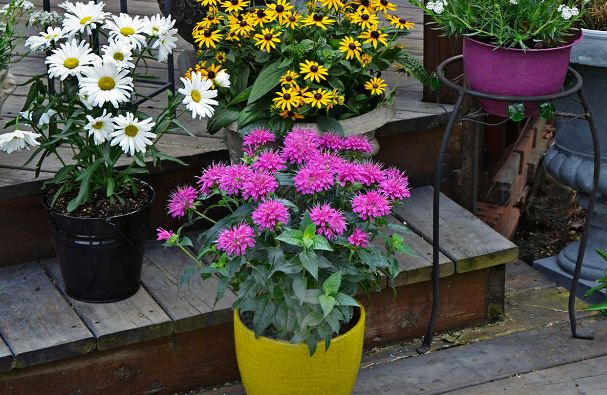 Keep Clean your container garden