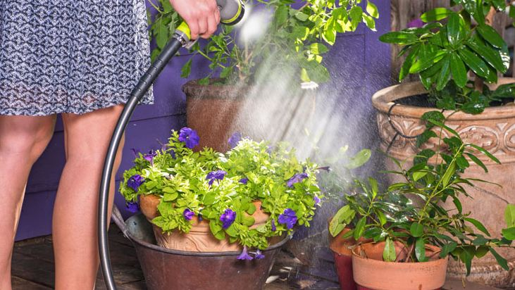 water regularly in your container plants