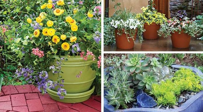 How To Make Container Garden : A Guide For Beginner
