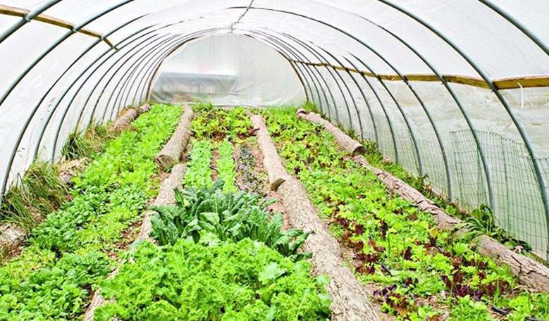 Greenhouse works