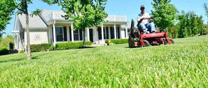Lawn Maintainance