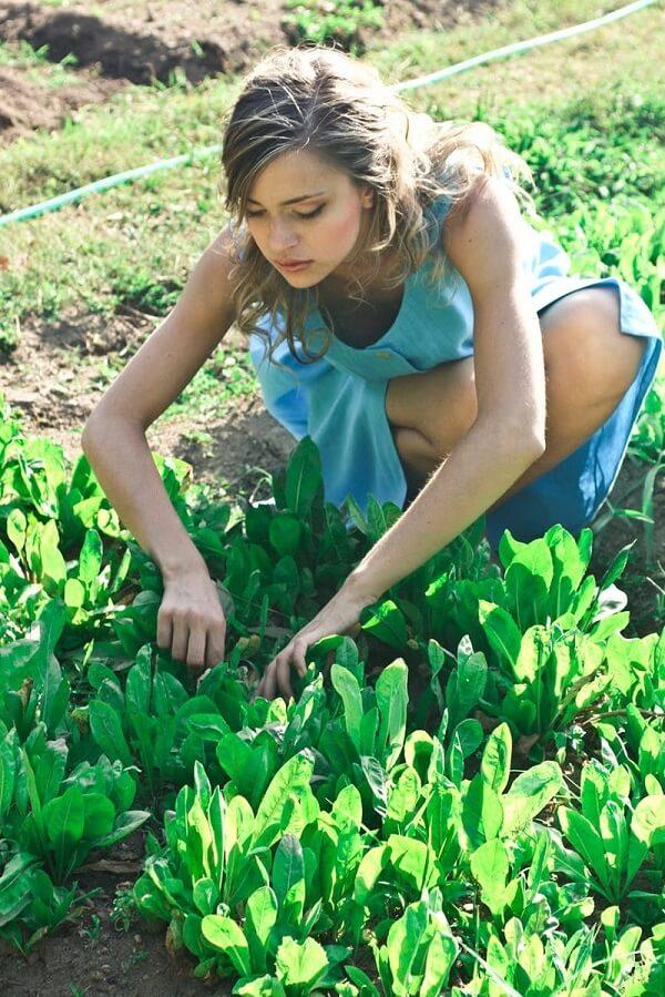 gardenever-home-banner