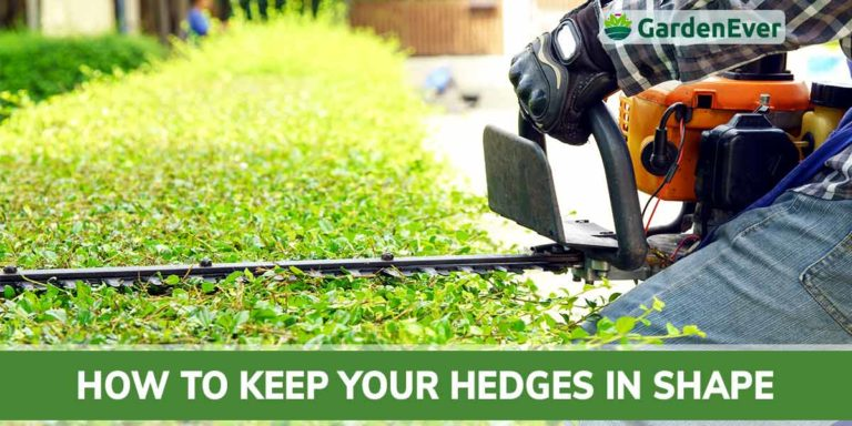 how to keep the hedge trimmer