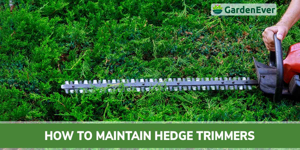 How to maintain hedge trimmer