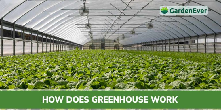 how does greenhouse work