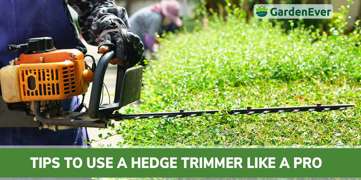 Actionable Tips to Use a Hedge Trimmer like a Pro