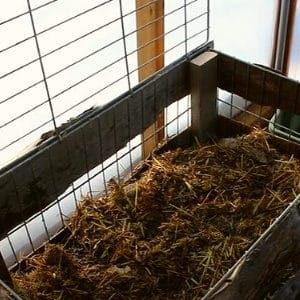 Compost in Small Greenhouse