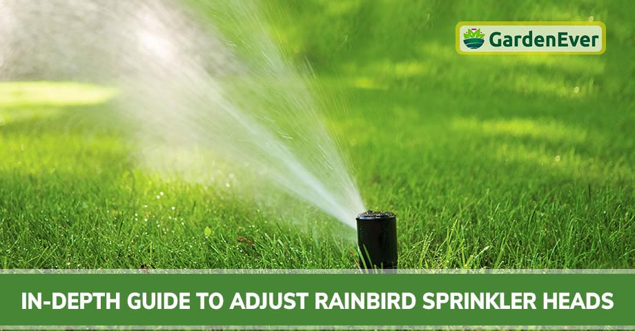In-Depth Guide to Adjust Rain Bird Sprinkler Heads