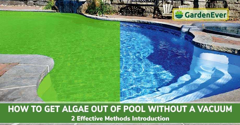 Get Algae Out of Pool Without a Vacuum
