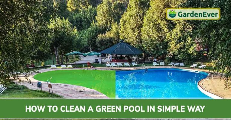 How To Clean A Green Pool In Simple Way