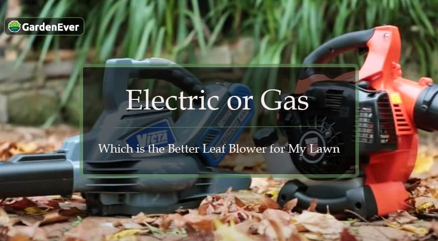 Electric or Gas- Which is the Better Leaf Blower for My Lawn