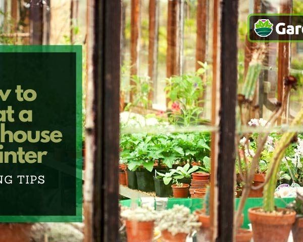 How to Heat a Greenhouse in Winter for almost Free : 10 Amazing tips