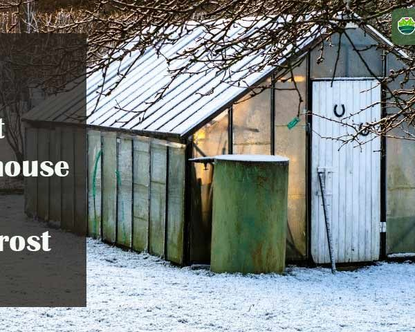 How to Protect Greenhouse Plants from Frost: 15 Pro Tips