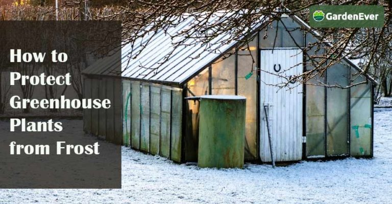 how to protect greenhouse plants from frost