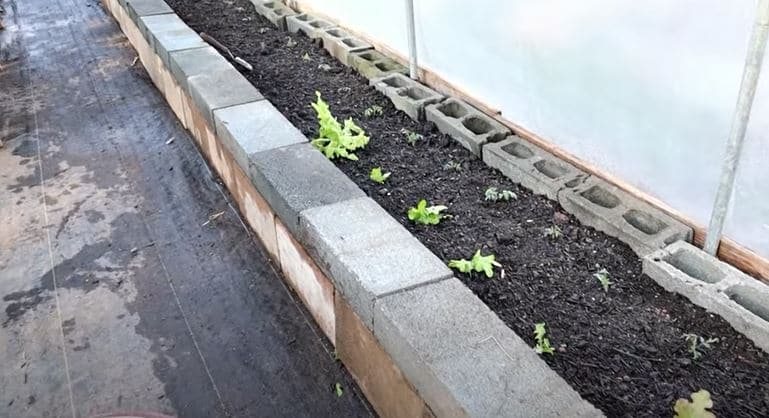 raised beds in greenhouse