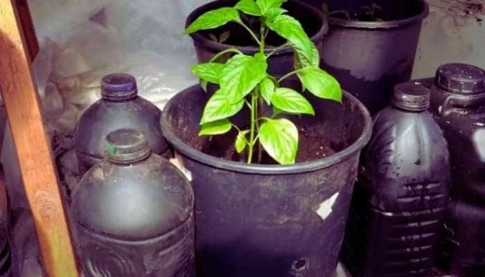 black water bottles in greenhouse