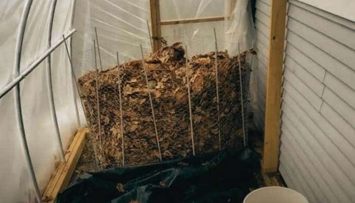 greenhouse compost pile